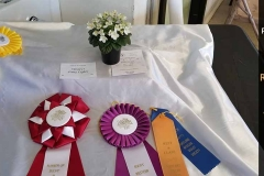 Wesley's Fairy Lights - Best Western Variety & Best In Show (Runner-up)